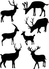 collection of deers - vector