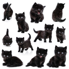 Black little kitten, collection, white background