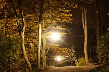 Autumn season at night