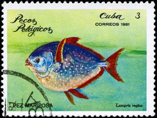 CUBA - CIRCA 1981 Glancefish