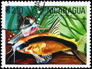 NICARAGUA - CIRCA 1981 Corydoras