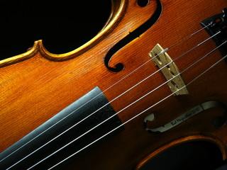 violin 04