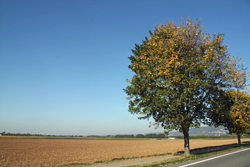 Strasse im Herbst II