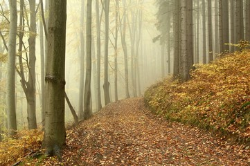 Keuken foto achterwand Bos in mist Lane through the mysterious woods on a foggy autumn morning