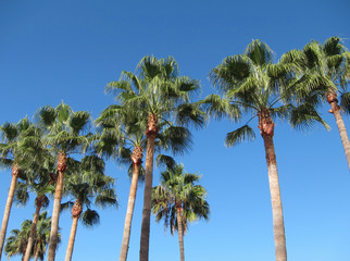 Palm trees and blue sky in Teneriffe.