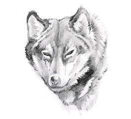 Wall Mural - Sketch of tattoo art, wolf