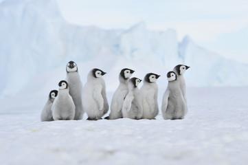 Cadres-photo bureau Antarctique Emperor Penguin