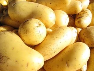 Pommes de terre sur un marché de Provence