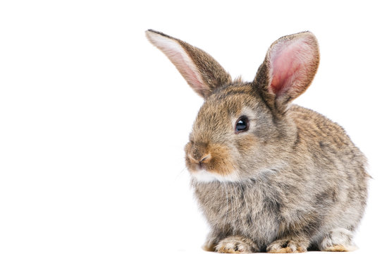 one young bunny rabbit