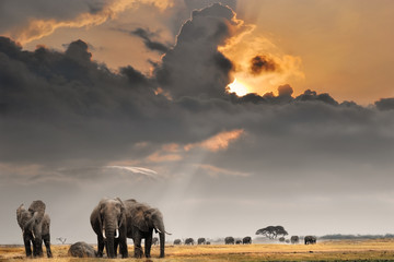 Foto auf Gartenposter Bestsellers African sunset with elephants