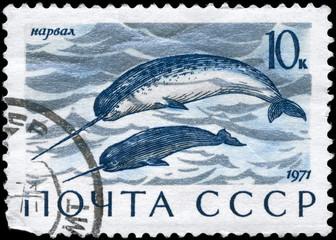 USSR - CIRCA 1971 Narwhals