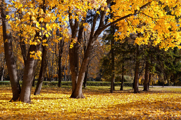 autumn trees in the park