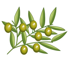 Green olives. Isolated olive branch.