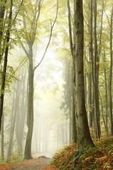 Keuken foto achterwand Bos in mist Mountain trail through the misty beech forest