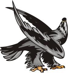 Eagle with black plumage. Predatory birds.