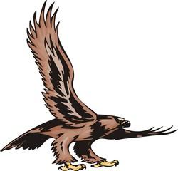 Eagle with brown plumage. Predatory birds.