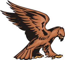 Eagle with brown plumage.