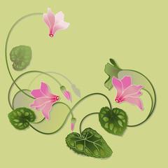 cyclamen decorative illustration