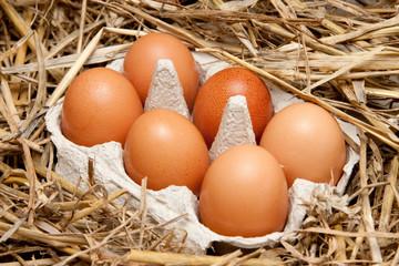 Hühnereier im Eierkarton