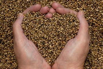 Hemp seeds held by woman hands, shaping a heart