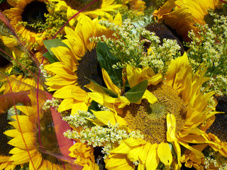 bunch of sunflowers, flower bacground