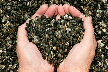 Sunflower seeds held by woman hands, shaping a heart