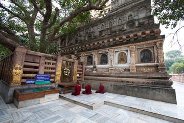 Meditation under the sacred Bodhi tree: Bodhgaya
