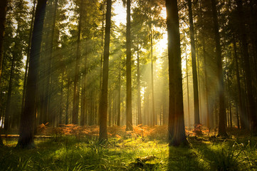 Foto op Canvas Bos Beautiful Forest