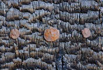 Texture of the burnt wooden wall