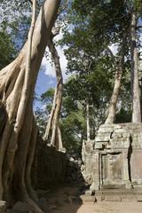 Banyan Tree over wall, Angkor