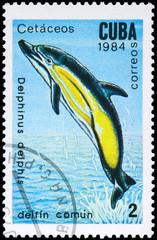 CUBA - CIRCA 1984 Dolphin