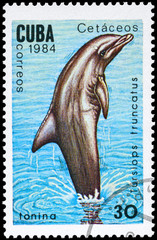 CUBA - CIRCA 1984 Bottlenose Dolphin