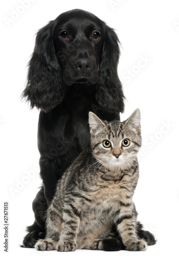 Fototapete Cocker Spaniel and European Cat, 5 and 4 years old, sitting