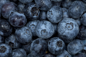 blueberry watered  background