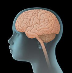 Gehirn eines Kindes