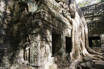 Tree roots Angkor Temple Ruins