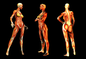 Females With Muscles