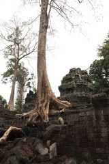 old temple in thailand with big roots of trees