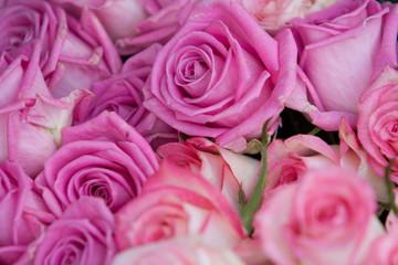 Foto op Textielframe Roses Flowers Beauty