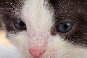 kitten's muzzle