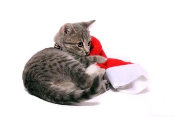 Kleine Katze kuschelt mit Nikolausmütze