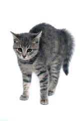 erschrockene kleine Katze
