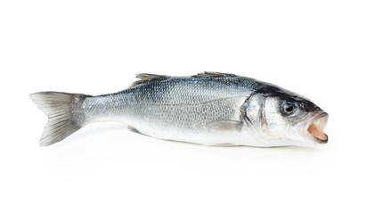 Fresh sea bass fish
