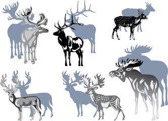 six grey deers on white