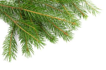 fir-tree