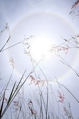 Sunlight over grass field