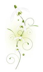 Schneeglöckchen, snowdrop, flora, Frühling, Blume