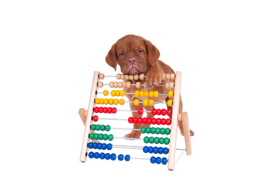 Puppy counting