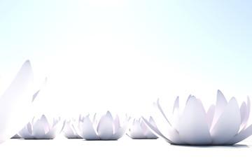 Fototapete - Zen loto flowers on white background