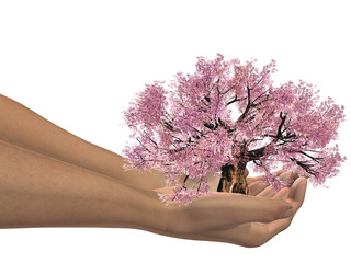 High resolution conceptual tree held in hands